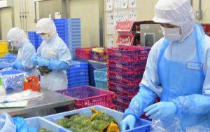 Tuyển dụng 06 nam chế biến thực phẩm tại Aichi, Nhật Bản